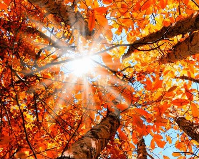 636464311881599711-Fall-Leaves-4-